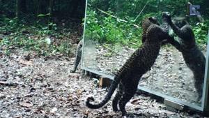 واکنش حیوانات با دیدن تصویر خودشون در آینه