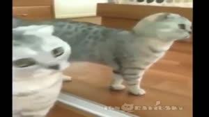گربه و آینه