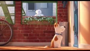 تریلر انیمیشن زندگی مخفی حیوانات خانگی