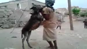 رقص با الاغ