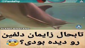 تابه حال زایمان کردن دلفین رو دیدی