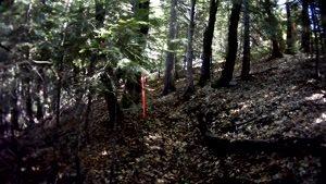 ورزش تریل در جنگل