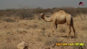 گنج نامه شتر دیدی ندیدی چیست