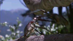مستند حیات وحش زندگی حشرات قسمت 1