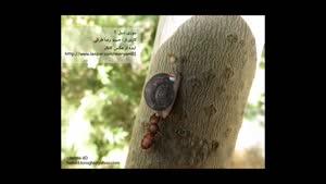 مورچه تنبل - خنده دار