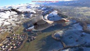 پرواز با پرندگان، جالب انگیز