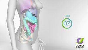 تغییرات بدن در بارداری هفته به هفته