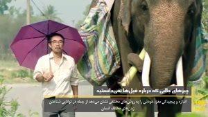 دانستنی های خیلی عجیب در مورد فیل ها