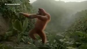 رقص عربی میمون