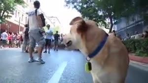 سگ قهرمان یونانی