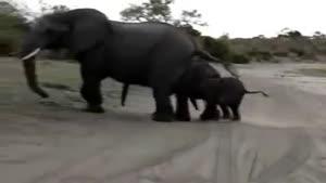 فیل کوچولوی با مزه
