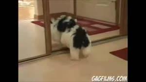 حیوانات و آینه..