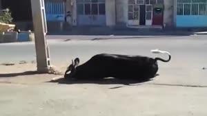 حیوون بیچاره