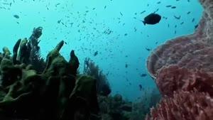 غواصی در آبهای اقیانوس آرام - جزیره بالی
