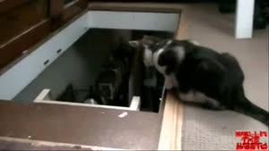 گربه بد ذات