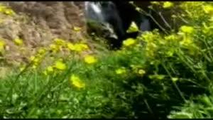 آبشار شیخ علی خان زردکوه