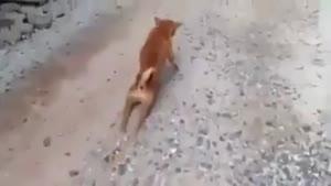 اینم یه روش برای سربالایی رفتن