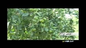میوه فروش ناقلا
