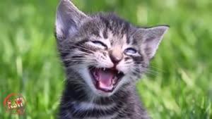 معصوم ترین گربه های دنیا