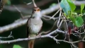 خوندن پرنده از نزدیک