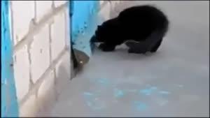 نجات سگ توسط گربه!!!