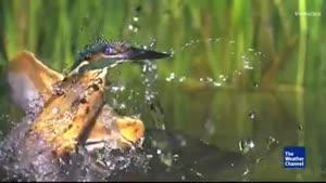 صحنه های آهسته از پرندگان