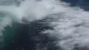 نهنگا تو دریا دنبالشون کردن