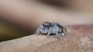 عنکبوت های ناب و کمیاب
