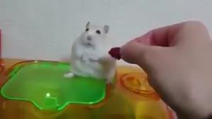 قهر کردن خرگوش