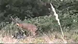 انتقام گوزن از شکارچی