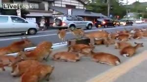 تجمع آهویی در خیابان