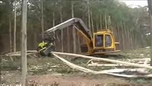 بنظرتون چقدر زمان میبره جنگل رو به کویر تبدیل کنه