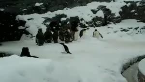 پنگوئن های بامزه