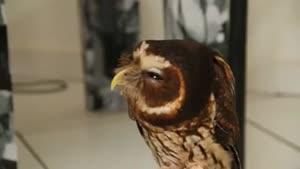 پرنده با این همه احساس دیده بودین؟