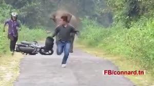 تا حالا عصبانیت فیل ها رو دیدید؟