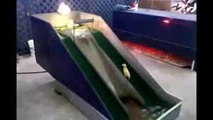 سرسره بازی جوجه اردک ها