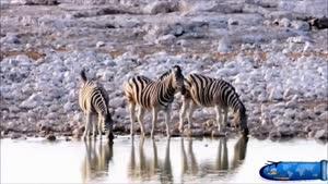 جاذبه های طبیعی افریقای جنوبی