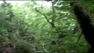 دورود پایتخت طبیعت ایران-سراب بیشه روستای تی