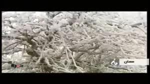 جاذبه های زمستانی ایران - جنگل زیبای يخي در سمنان