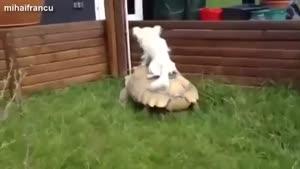 بامزه ترین سگهای دنیا