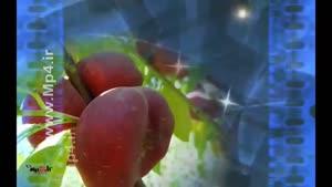 خواص میوه ها - شلیل