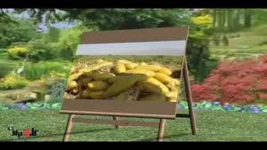خواص میوه ها - خربزه