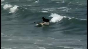مسابقات موج سواری سگ ها
