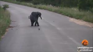 بازی بچه فیل بانمک با گنجشک ها