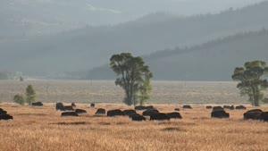 پارک ملی گراند تیتون در ایالت وایومینگ امریکا - با وضوح 4k