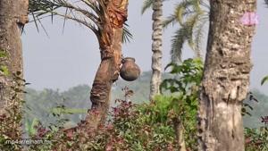 گذری از بنگلادش با کیفیت  ۴k