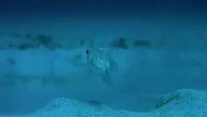 طراحی شگفت انگیز یک شکل زیبا توسط یک نوع ماهی   ی