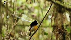 پرنده ایی از بهشت