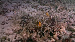 طبیعت زیر آب - با وضوح ۴k