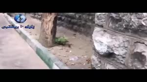 کشف شهر موشها در میدان فاطمی تهران